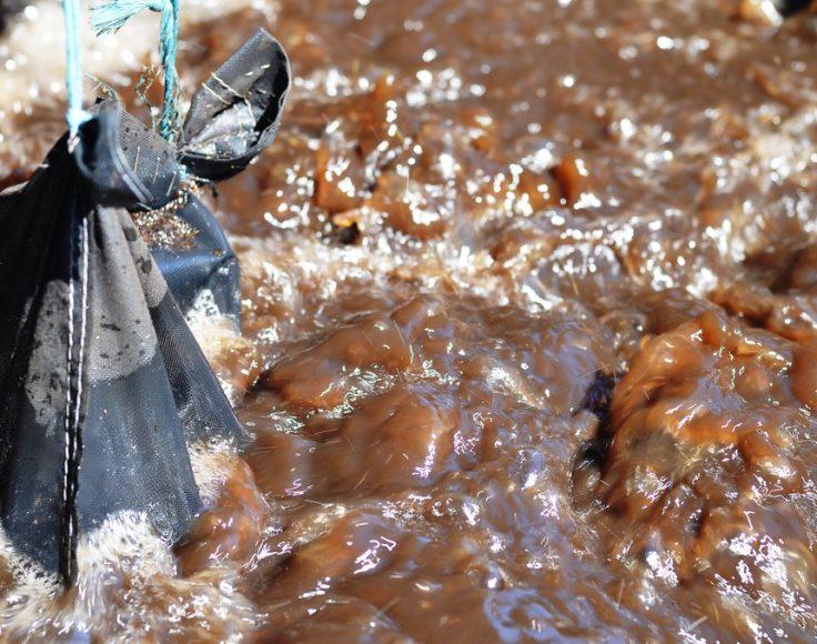 Un sac en filet noir est suspendu, en partie immergée dans un eau brune et bouillonnante.