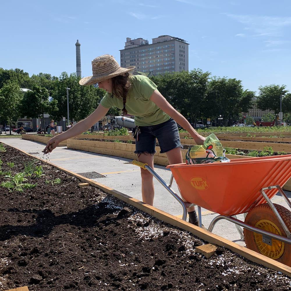 Une jardinière étend un engrais granulaire dans un rang de culture.